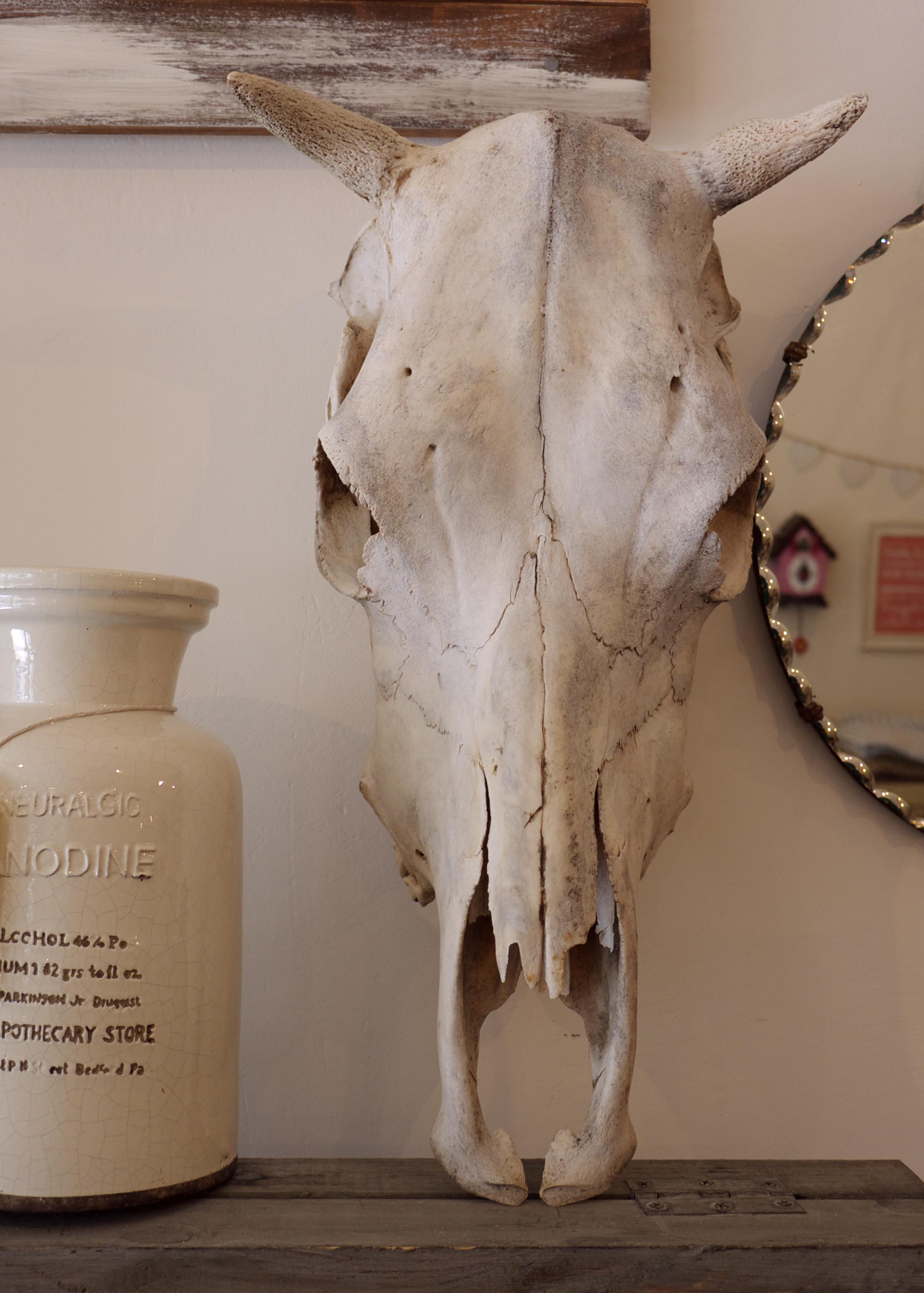 Sky Parlour Animal Skull with Horns