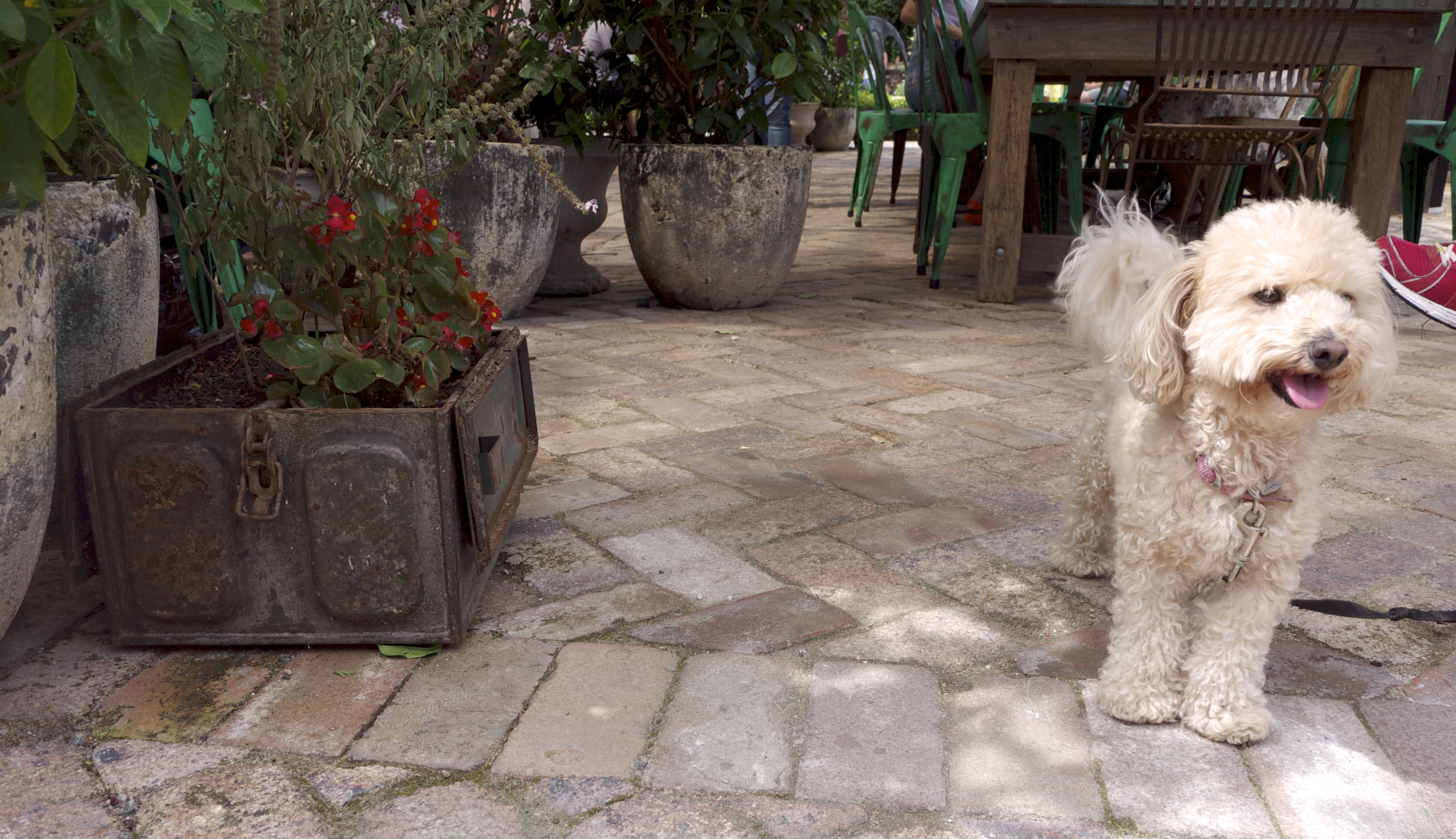The Grounds of Alexandria - Dog and Rusted Planter Box