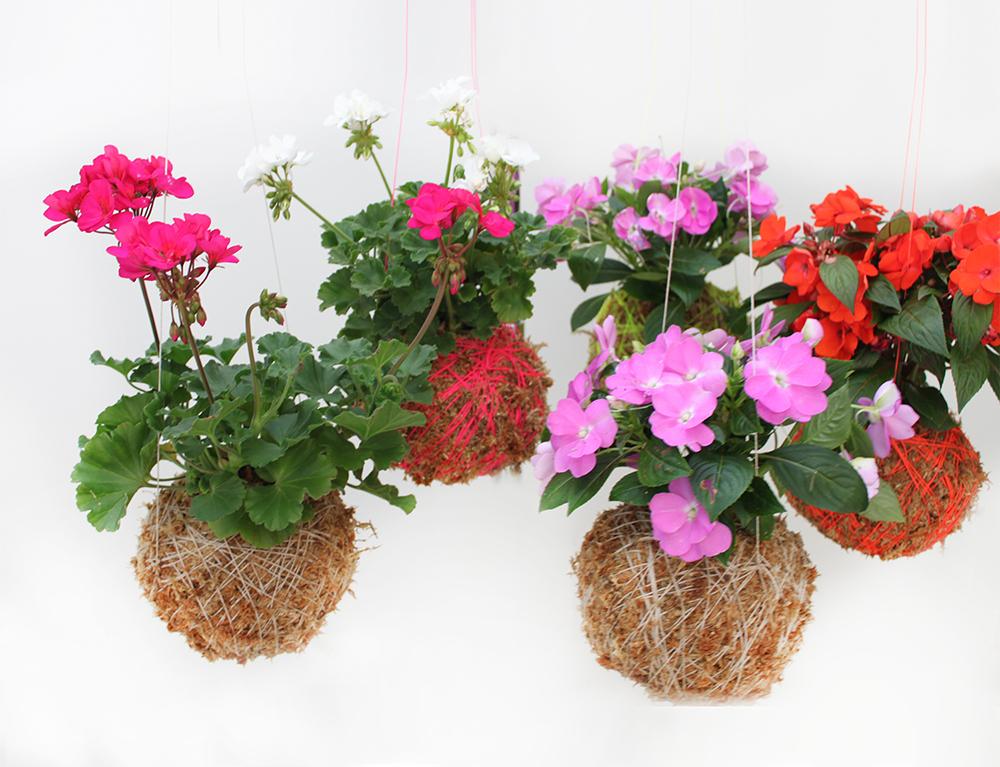 Mister Moss hanging plants