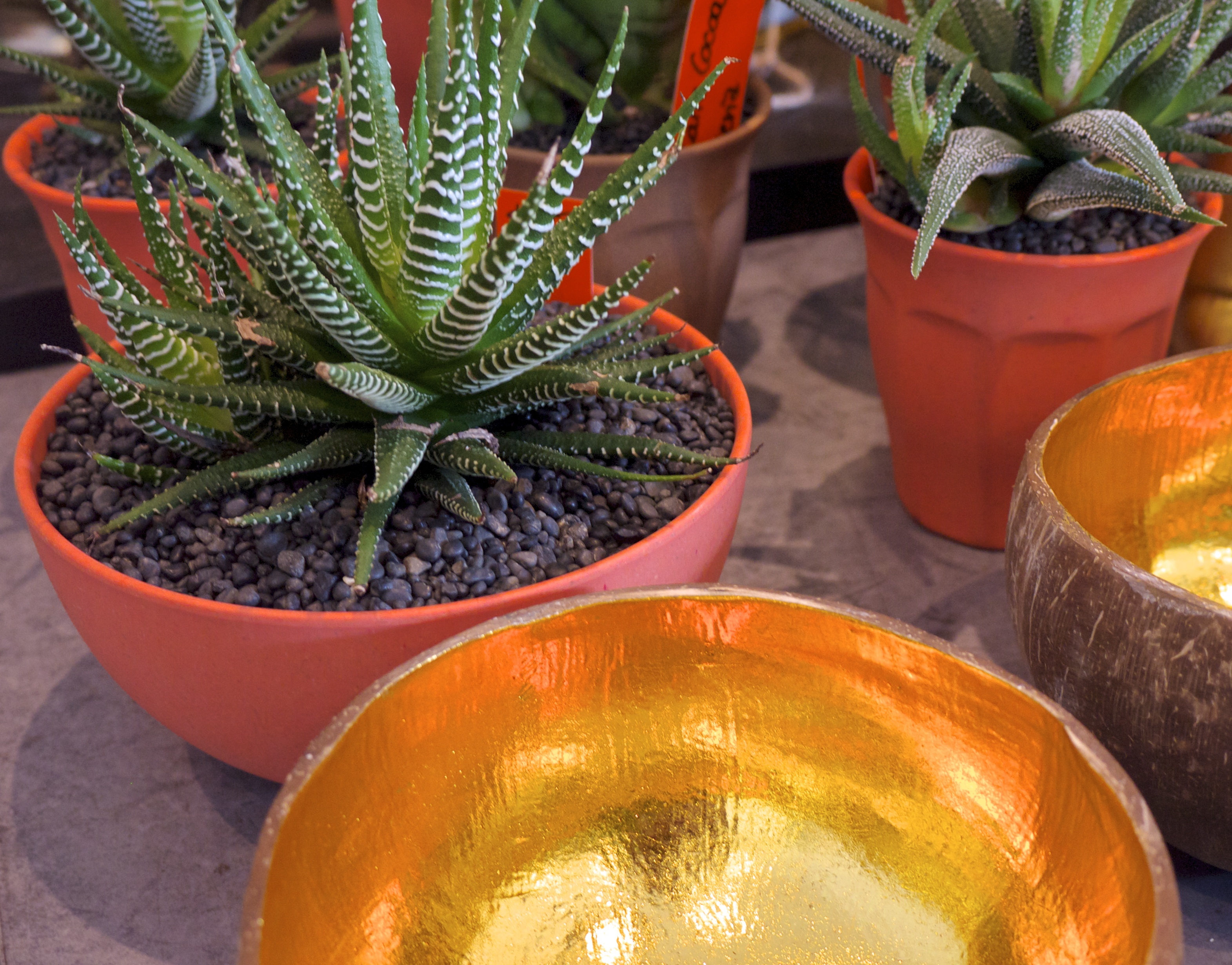 Garden Life Redfern - Plants in Orange and Gold Pots