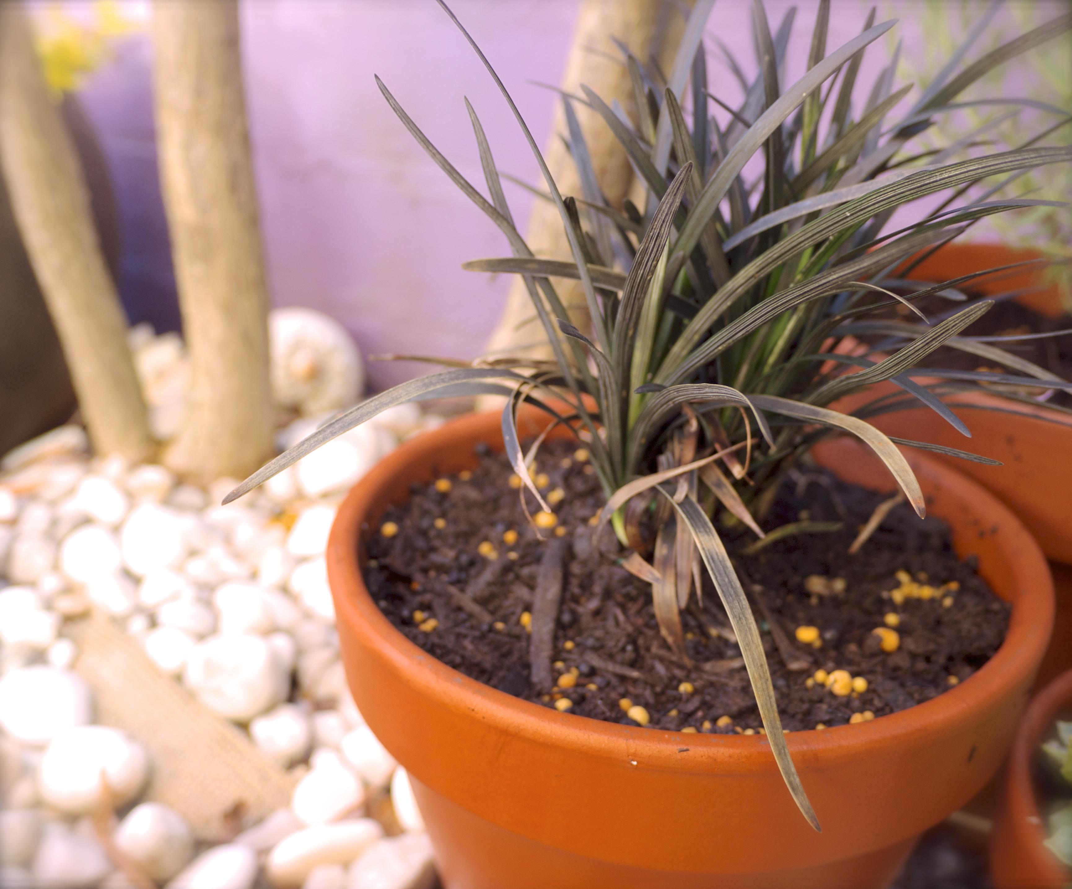 Low Maintenance Garden - Mondo Grass