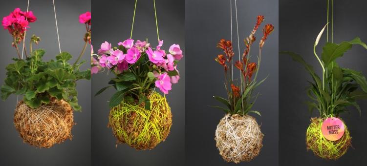 range of Mister Moss hanging plants