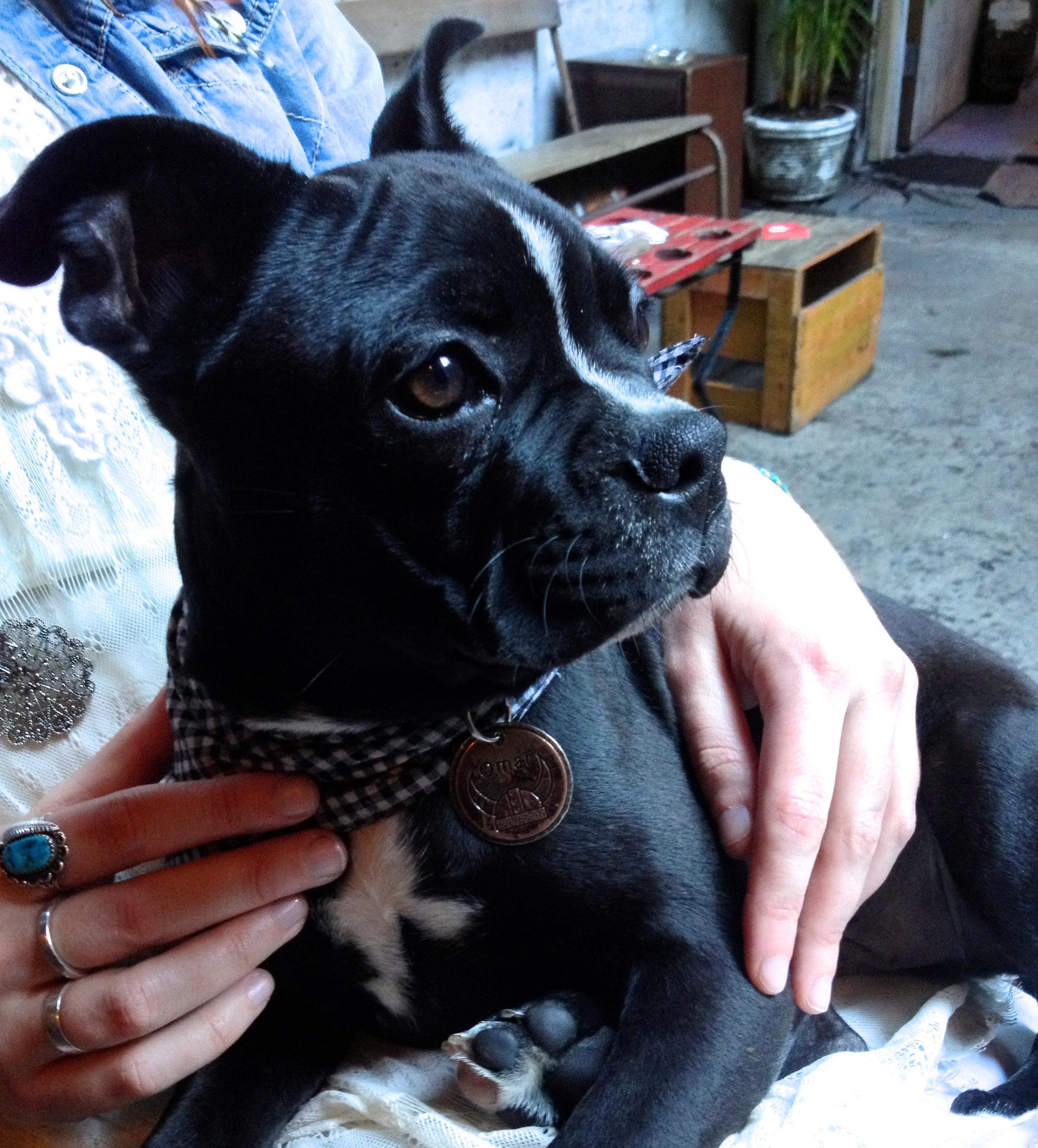 Cute Doggy - Arcadia Liquors in Redfern