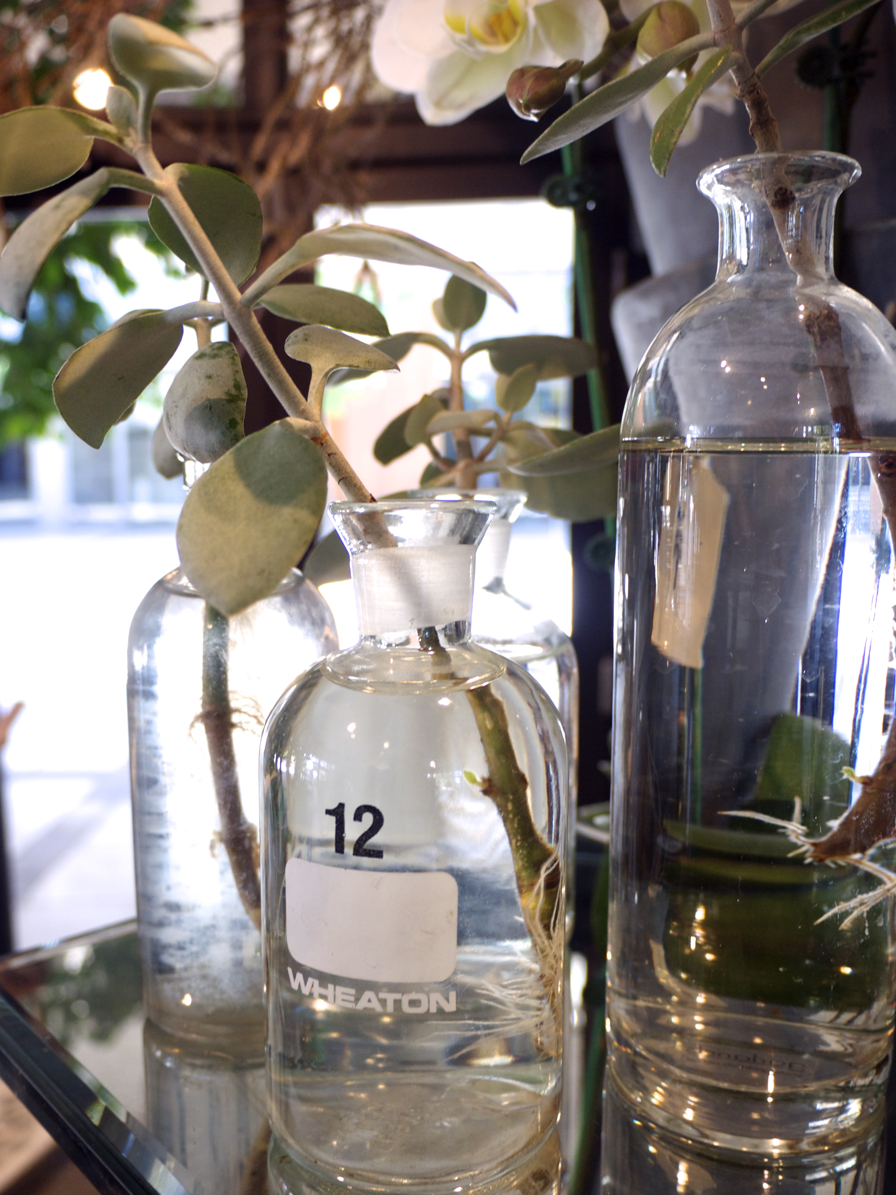 Glass Jars - Garlands Florist, Surry Hills