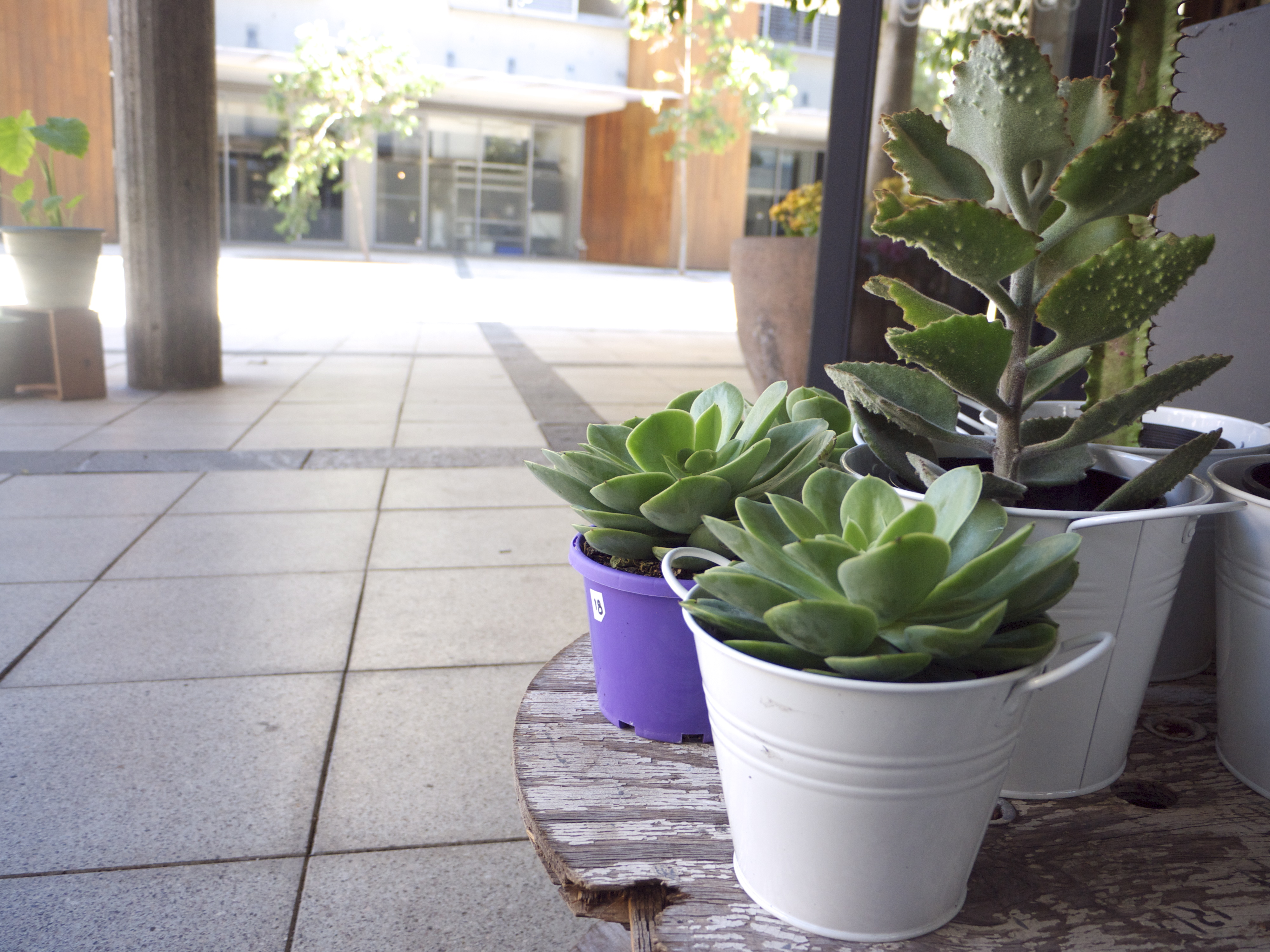 Succulents - Garlands Florist, Surry Hills