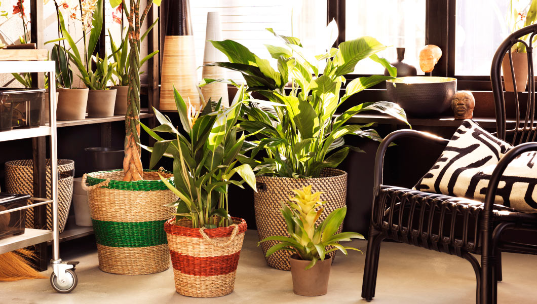 Revamp your Indoor Plants with these IKEA pot holders