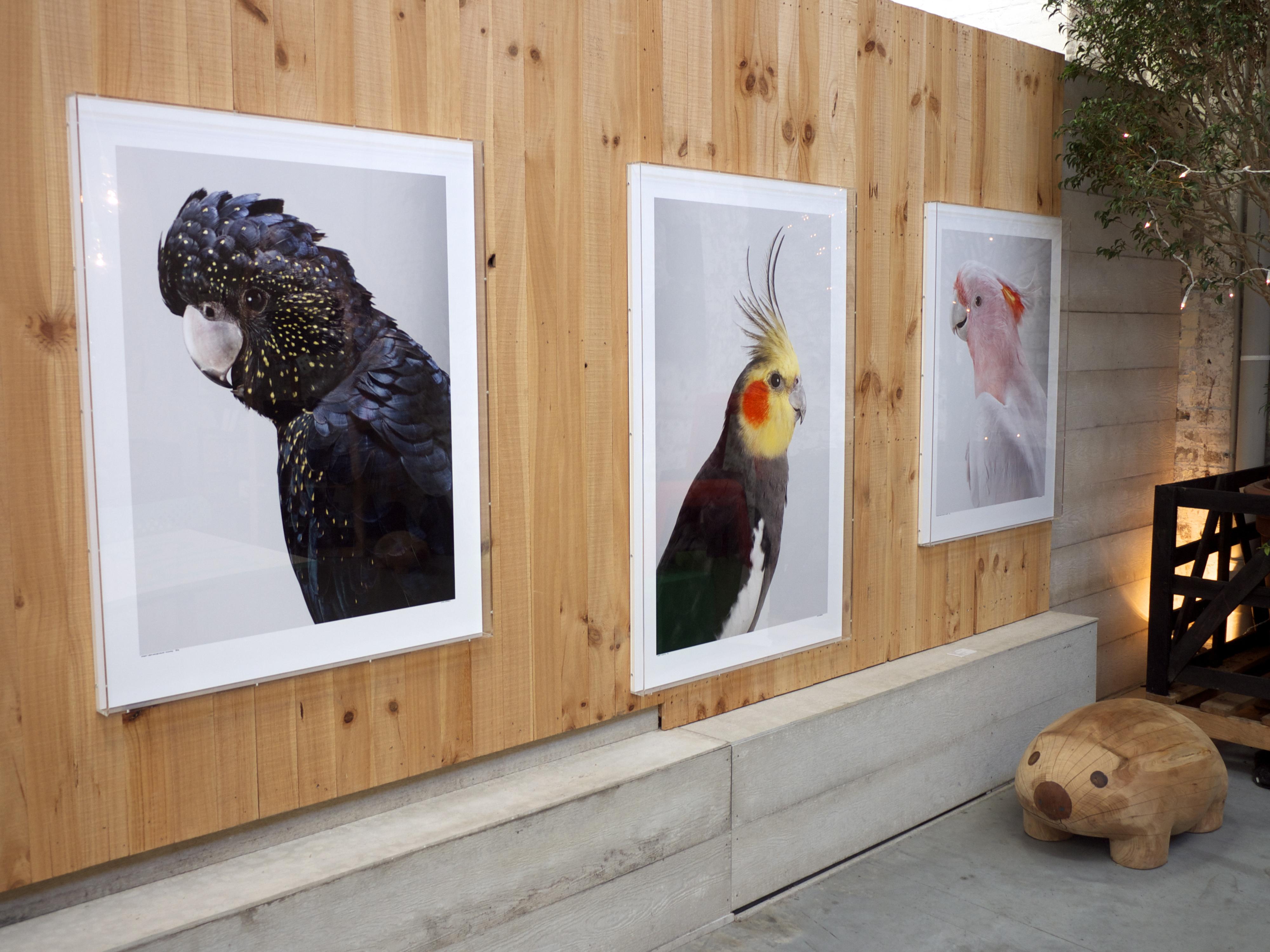 Koskela - Bird Art Wall